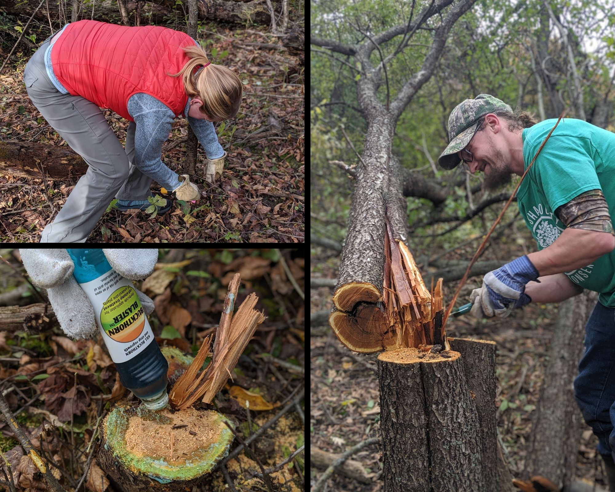Volunteers from Good City and the Waukesha County Land Conservancy cutting down buckthorn